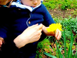 Forest School Flowers